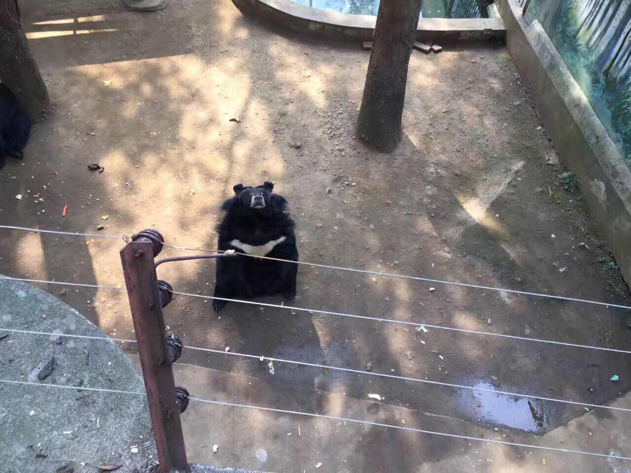 红山森林动物园   成人票 - (不含企鹅馆)