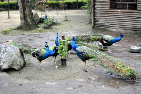 谷/上海影视乐园/月湖雕塑公园/上海动物园(景点5选1) 酒店免费wifi