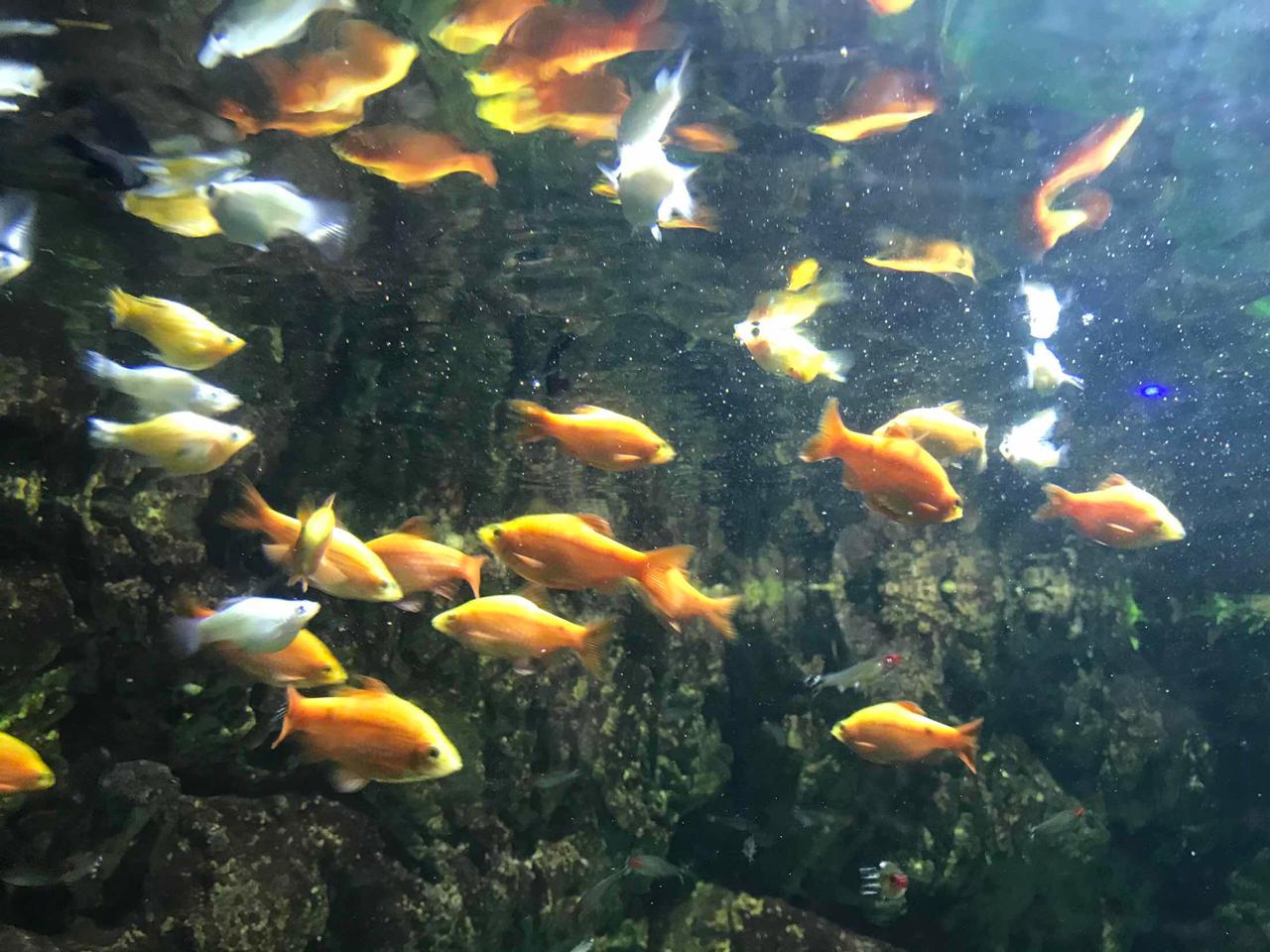 杭州海底世界-杭州野生动物园|杭州极地海洋公园|杭州