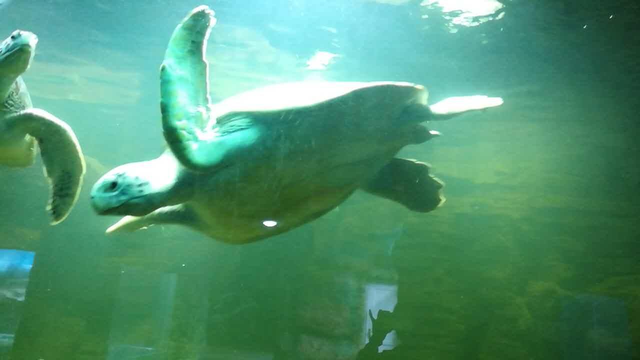 西宁野生动物园海洋馆