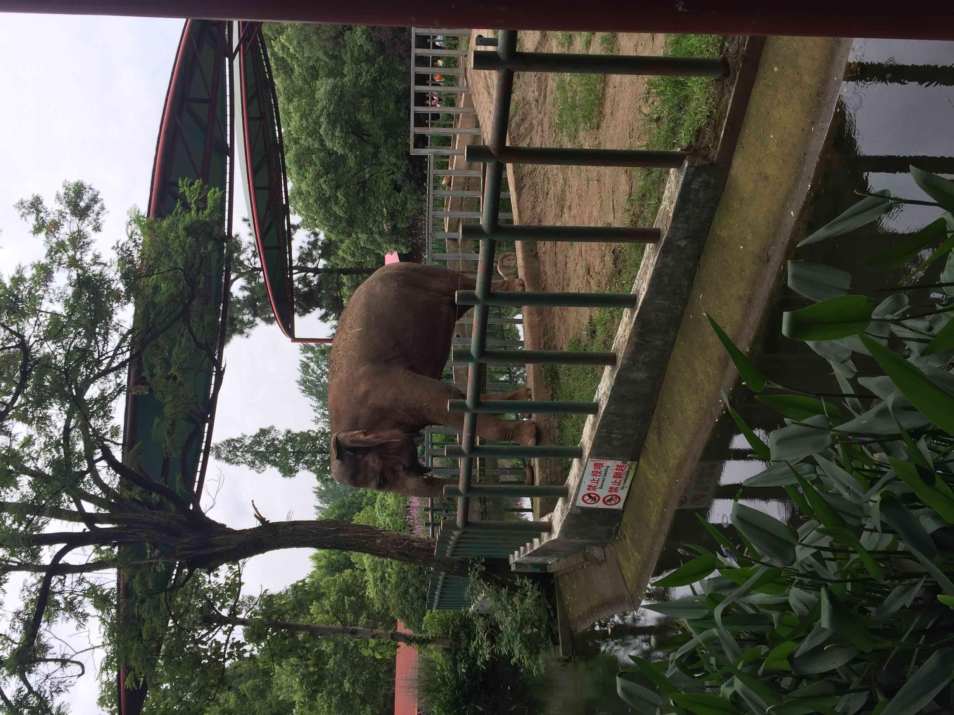 红山森林动物园   成人票【扫码go】