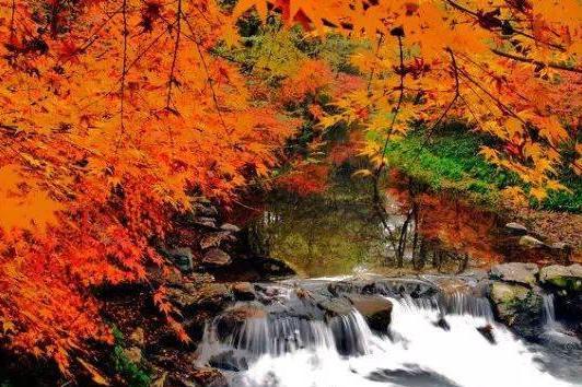 杭州九溪十八涧徒步1日游 大手拉小手,穿过壮观的龙井茶园,远