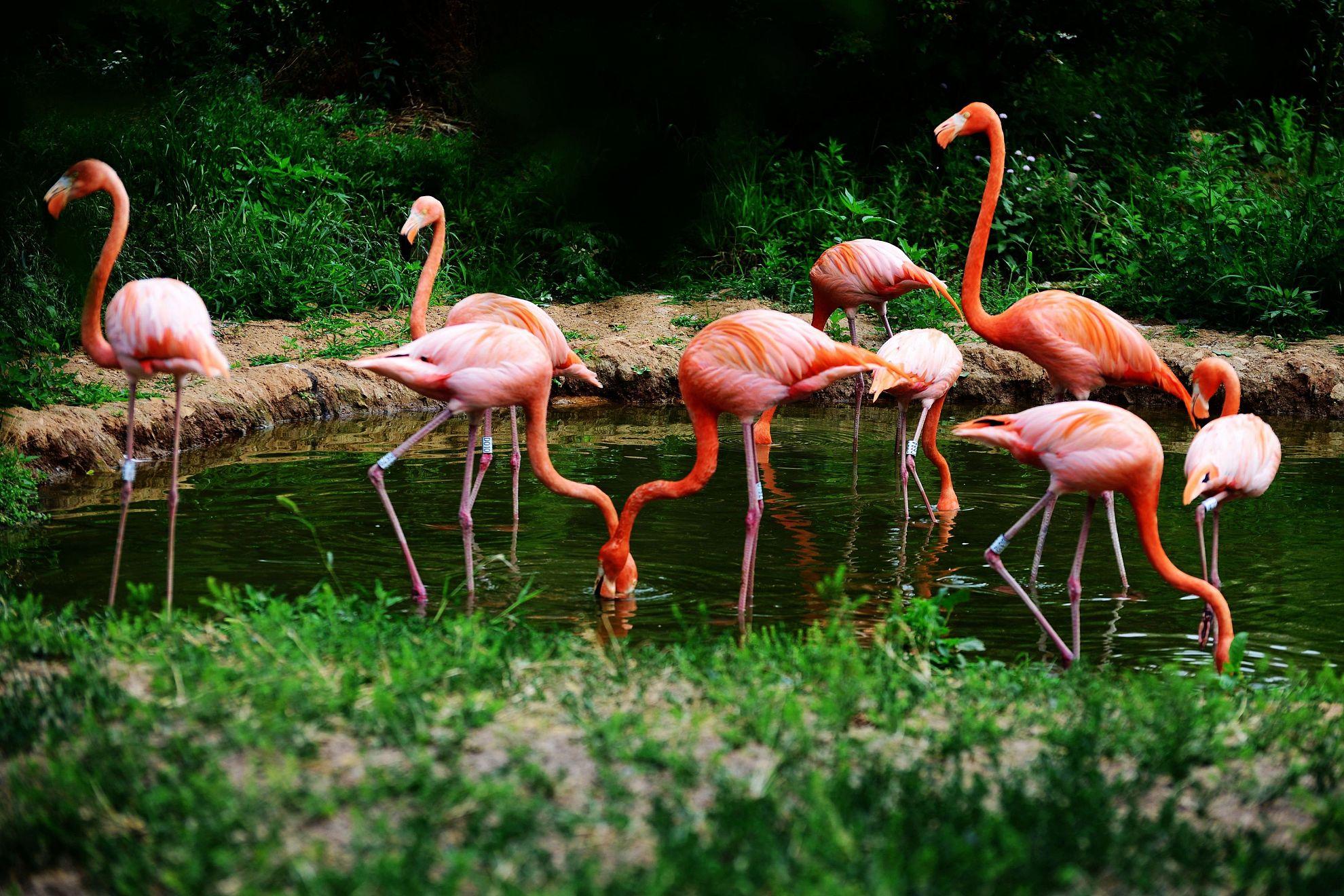 青岛森林野生动物世界   儿童票