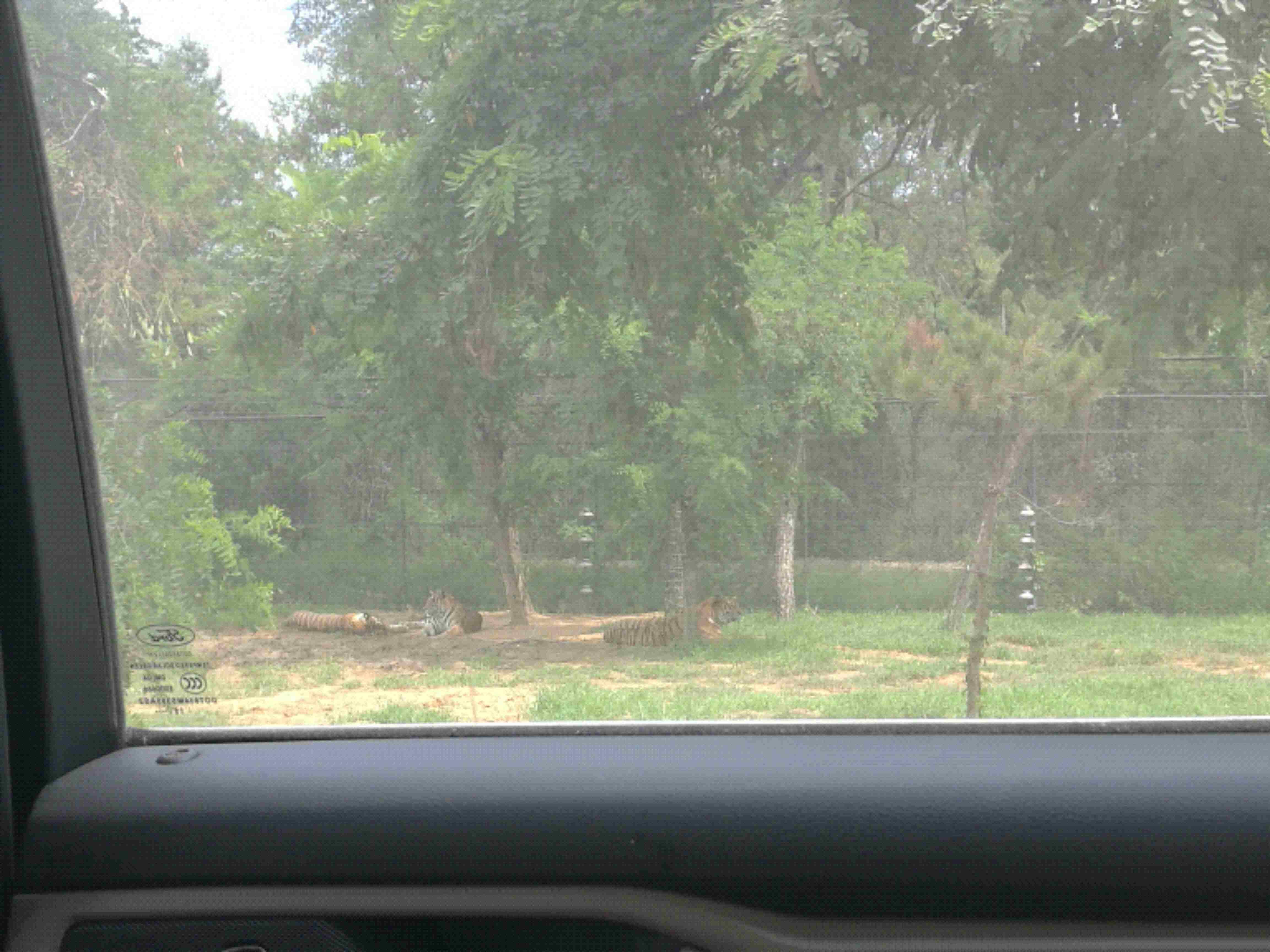 秦皇岛野生动物园 成人票秦皇岛野生动物园园区很大