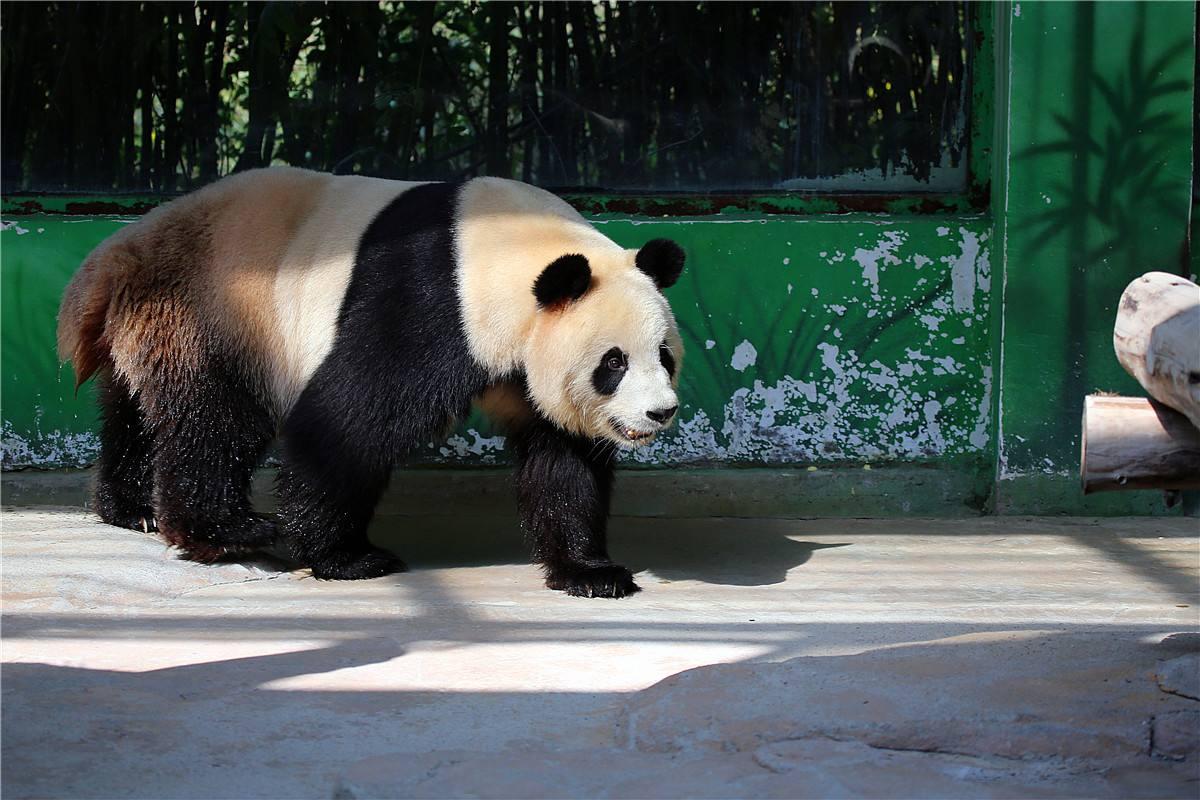 杭州野生动物园1日巴士跟团游