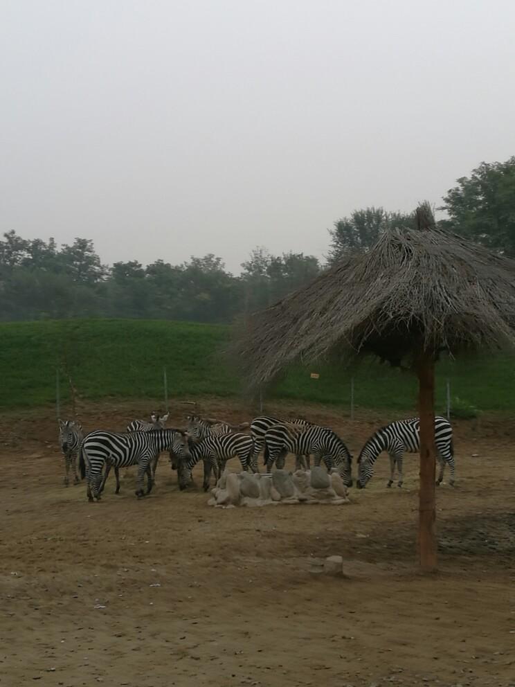 北京野生动物园   成人票