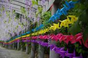 【旅行是换个地方生活】住1晚上海圣淘沙万怡酒店(原新发展圣淘沙大酒店)+上海海湾国家森林公园