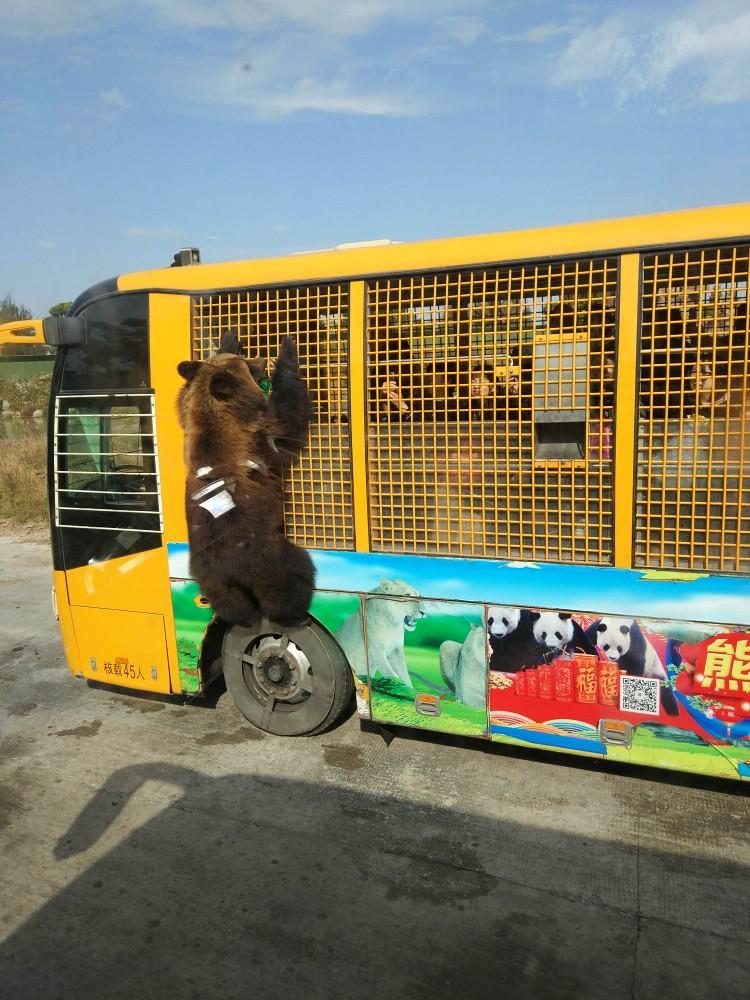 上海野生动物园   成人票(包含猛兽区大巴游览)