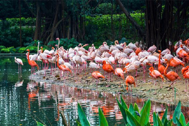 [除夕盛宴]台山康桥温泉,野生动物园巴士3日2晚跟团游