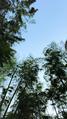 湖州 2天1晚 【四季嗨不停】住1晚安吉帐篷客溪龙茶谷度假酒店(含早)+杭州Hello Kitty乐园/中国大竹海/安吉竹博园/中南百草原/安吉田园嘉乐比乐园/藏龙百瀑/天下银坑/江南天池,八选一