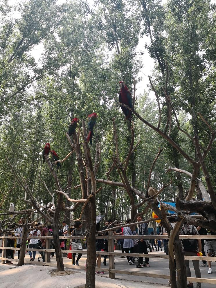 北京野生动物园   双人票 学生/老人优惠票