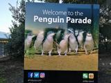 墨尔本菲利普岛与巧克力工厂1日游(马尔沃考拉、动物园、企鹅大游行)