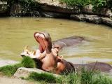 上海迪士尼、野生动物园双飞3日跟团游(非常迪士尼,可升级东方明珠,野生动物园亲子,赠送俄罗斯大马戏表演)