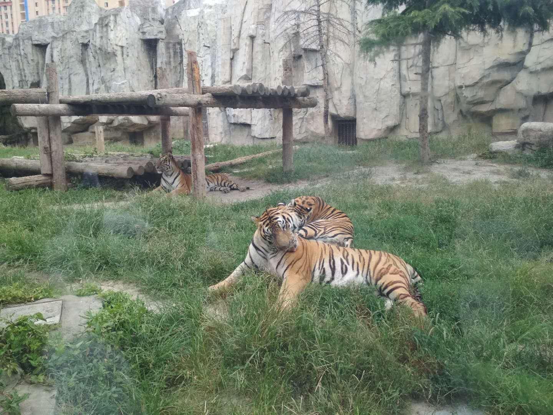 上海野生动物园   成人票(包含猛兽区大巴游览)【特价周爆款】
