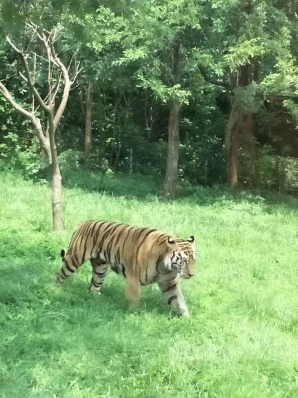上海野生动物园 2大1小家庭票(包含猛兽区大巴游览)园