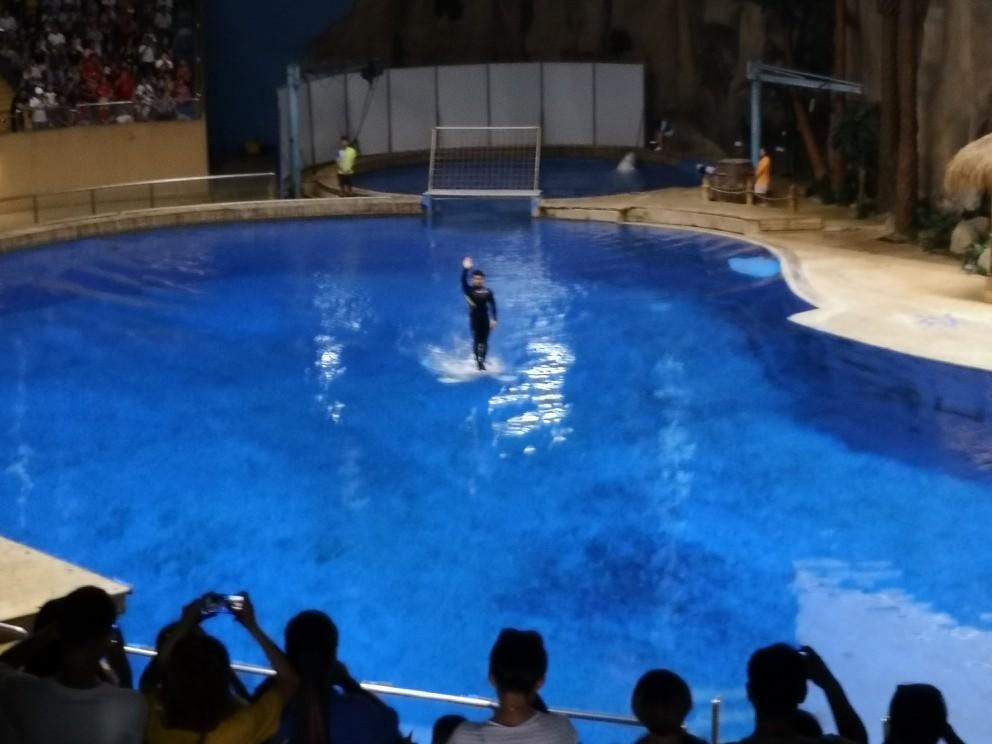 海洋馆换票方便,入园便捷。基础设施和服务改改进了。人太多了,周一去的人很多。看海豚表演之前,景区在推广看一场单人次20元时长15分钟的巨幕电影,看完电影可以原座位等待看海豚表演。大部分人为了有个座位看海豚海狮表演,都 被 选择了看电影。这作为首都国家级的场馆,在向钱看的问题上有些迫切了。动物园有些场馆比较破了,动物也不全了。各种猴子挺多,可能猴子好养活吧。总体体验还行。