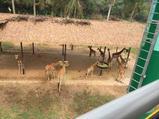 广州长隆2天1晚【双人自由行-超级巡礼】住熊猫酒店+长隆野生动物园(两天多次入园)