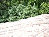 2天1晚 【奇松迎客遍山水  今日登高醉几人】住1晚北海宾馆/白云宾馆/西海饭店/狮林大酒店/排云楼/玉屏楼宾馆(房型任选)+黄山风景区