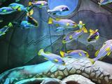 三亚2天1晚【爆款来袭】三亚·亚特兰蒂斯双早+含双人无限次游览水族馆和水世界门票