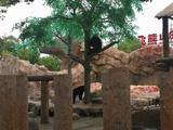 【观野生动物园萌宠or游海昌海洋公园】2天1晚桔子水晶酒店(上海国际旅游度假区野生动物园店)+上海野生动物园/上海海昌海洋公园+赠班车接送