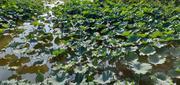 上海2天1晚【潮流住房车 森林嬉水节】东平国家森林公园景区内房车双早+免东平国家森林公园门票2张+森林嬉水节门票+桃园采摘+野趣营地生态小菜园科普参观